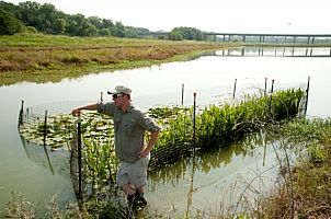 Protection cages for aquatic plants in the Lower Chain of Wetlands