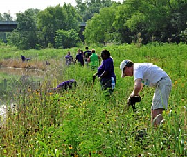 Volunteers Restoring Lower Chain of Wetlands